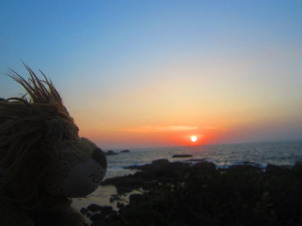 Lewis the Lion watches the sun set over Palolem