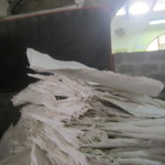 Quality cotton paper is produced