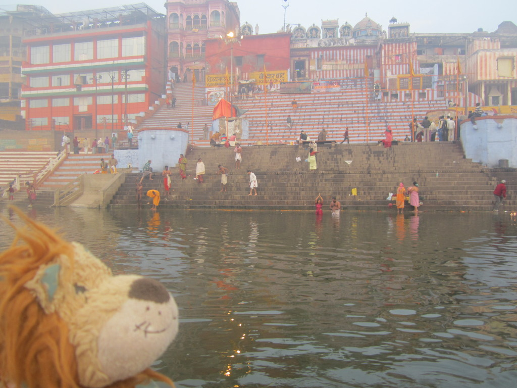 Lewis the Lion watches the couple taking the dip together